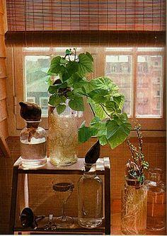 1000 images about cent idees on pinterest screen design - Comment planter des patates douces ...