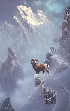 Ted Blaylock - Bighorn Hideaway - Complete colection of art, limited editions, prints, posters and custom framing on sale now at Prints. Goat Paintings, Wildlife Paintings, Wildlife Art, Bigfoot Photos, Nature Hunt, Hunting Art, Winter Art, Fauna, Pet Birds