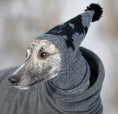 love this whippet toque #knit