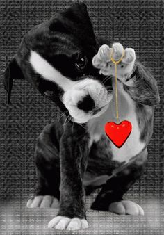 This little puppy want to give you it's heart <3