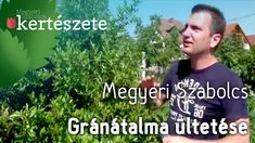 Szoliter növény -  Punica granatum - Gránátalma ültetése - Megyeri Kerté...