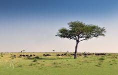 Cottar's 1920s Safari Camp, Maasai Mara   Luxury Hotels Travel+Style