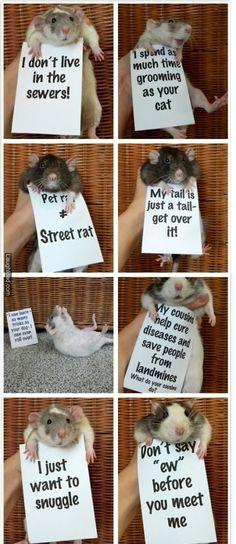 Rats need love too