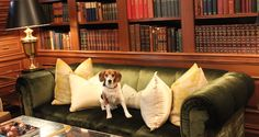 Lord Monticello, a.k.a. Monti (a rescue dog) is the Resident Canine Officer at The Jefferson Washington D.C., which welcomes guests and dogs to the hotel with beds, bowls, and walking maps.