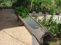 canoe pond, via Flickr. Dugout canoe pond.