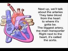 Circulatory system song