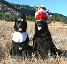 Bojie and Rigsby- How the west was won, one Newf at a time: The story of Thanksgiving, reenacted.