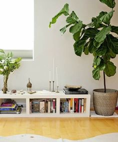Tips for Growing Fiddle Leaf Figs | Apartment Therapy