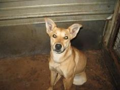 Spirit is an adoptable Terrier Dog in Chipley, FL. Spirit is only about 30-35 pounds and just a sweet and friendly girl. She has ears that reach the sky and is just the perfect size. Not sure what her...