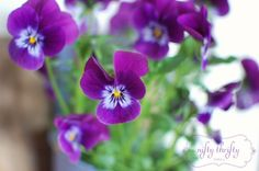Pansies! These would be so cute on my deck in containers. via Nifty Thrifty Things