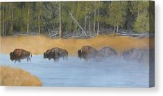 """Bison herd crossing a steamy fog river painting - """"Firehole River Crossing"""" is available for purchase on Giclee fine art paper and canvas prints by Johanna Lerwick Wildlife / Nature Artist. Original Artwork, Original Paintings, River Painting, Nature Artists, Wildlife Nature, Nature Paintings, Stretched Canvas Prints, Fine Art America, Fine Art Prints"""