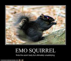 Emo Squirrels