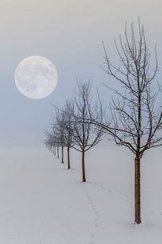 Beautiful moon and snow landscape Winter Szenen, Winter Love, Winter Trees, Beautiful Moon, Beautiful Places, Beautiful Pictures, Beautiful Scenery, Simply Beautiful, Snow Scenes