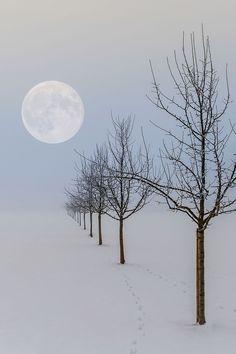 Beautiful moon and snow landscape Beautiful Moon, Beautiful World, Beautiful Places, Beautiful Pictures, Beautiful Scenery, Simply Beautiful, Winter Szenen, Winter Love, Winter Trees