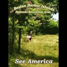 Boston Harbor Islands National Recreation Area by Eitan S. Kaplan  #SeeAmerica