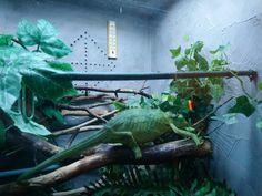 Kameleonttien persoonat – Maanantaikappale