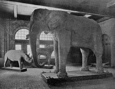 Interior view of Barnum Museum with Jumbo - Tufts Digital Library