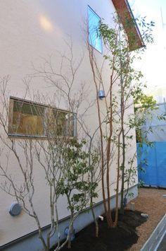 雑木の庭つくり日記@高田造園設計事務所 東側の狭い空間は、窓配置に応じた植栽を常に心がけます。1階窓、2階窓、木々越しの景色を美しく潤い豊かに構成してゆくことで、住まいに居ながら自然を感じ、落ち着きのあるゆったりとした日常を作り出す、心地よい住まいの庭はその家屋に沿って作っていきます。決して庭だけでは完成せず、同時に家だけでは決して心地よい住まいは生まれません。 植栽は建築作品を引き立てるための単なるデコレーションではありません。住まいの環境、快適な住まい、そのための植栽、住む人の長年の心地よさを作り出すのが造園や建築であるという責任を、我々住まいの作り手は常に真剣に意識しなければなりません。そのことが建築や造園世界の常識となれば、日本の住まいはもっとよくなってゆくように思います。
