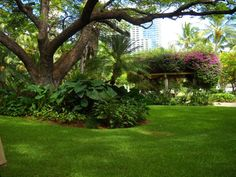 Hale Koa garden at the Hale Koa Hotel in Waikiki- where we got married.