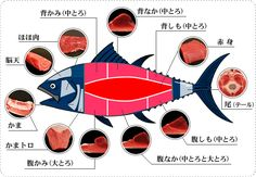 Here are parts of the Tuna that Japanese people use to eat. Food Graphic Design, Menu Design, Food Design, Design Ideas, My Sushi, Cooking Ingredients, Information Graphics, Sashimi, Japanese Food