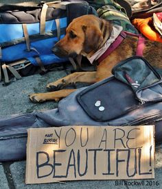 https://flic.kr/p/KJjET5 | You Are Beautiful Too | The plight of homeless pets follows the same path of their homeless owners. Here a faithful companion waits for the return of his owner. He hopes his sad eyes will give heart to passersby drop same spare change. Any metropolitan area  you will encounter homeless people. I try never to pass them by or block them out, I make eye contact and say ,Hi. Christians believe that Jesus walks among us, disguised as a beggar homeless man testing us…