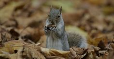 Did You Know that squirrels plant trees?
