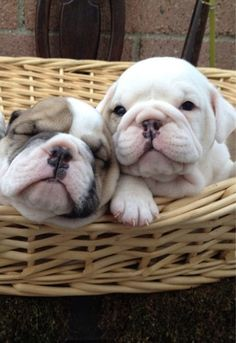 beautiful basket babies..