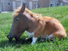 corgy in horse mask