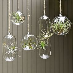 if i had enough sunlight..., shane powers hanging glass planters