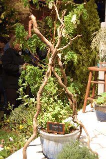 The Bumbling Gardenista - easy trellis