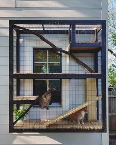 Built a custom catio for our two cats that connects to the laundry room window for easy access Diy Cat Enclosure, Outdoor Cat Enclosure, Reptile Enclosure, Cat Window, Room Window, Window View, Cage Chat, Cat House Diy, Cat Cages