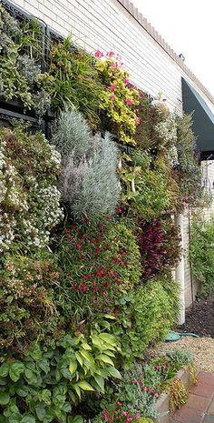 living wall for your garden gardening