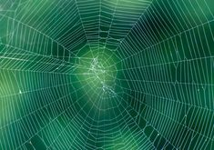 Spider web on abstract blur green background