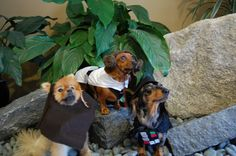 HOW TO – Make Star Wars Halloween Costumes for Dogs