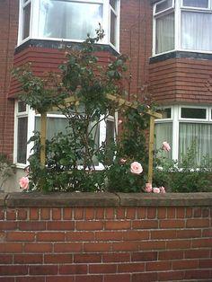 Front garden: beginnings of a rose bower
