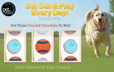 """Pet Valu's """"Get Out and Play Everyday Instant Win"""" Contests Canada, Canadian Contests, Instant Win Games, Word 3, Visa Gift Card, Getting Out, Play, Amp, Reading"""