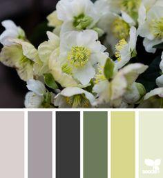 flora hues 4.8.15
