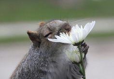 Animal and the flowers / boredpanda.com