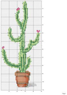 Gallery.ru / Фото #19 - cactus - patrizia61
