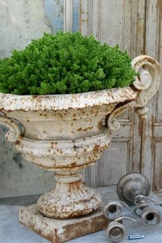 Urn filled with greenery.