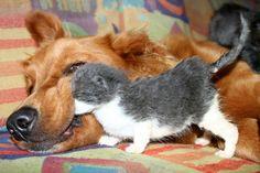 ❁ Gatito en la boca del perro ❁