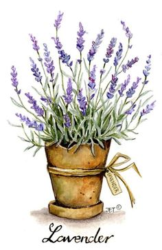 home decor watercolor lavender in can - Yahoo Image Search Results Watercolor Cards, Watercolour Painting, Watercolor Flowers, Painting & Drawing, Watercolours, Art Floral, Lavender Flowers, Lavander, Lavender Plants