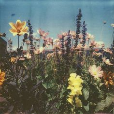 Find images and videos about vintage, aesthetic and nature on We Heart It - the app to get lost in what you love. 70s Aesthetic, Flower Aesthetic, Aesthetic Vintage, Aesthetic Photo, Aesthetic Pictures, Aesthetic Collage, Picture Wall, Photo Wall, Arte Peculiar