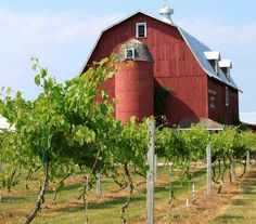 Orchard Country Winery & Market 9197 Hwy 42, Fish Creek, WI 54212 920-868-3479