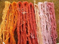 A range of shades from Hedge Bedstraw (Galium mollugo)