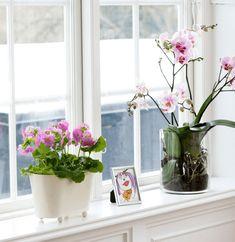 Fesselnd Deko Wohnzimmer Fensterbank