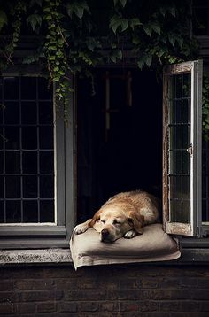 Sleepy pup in a lovely window