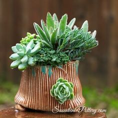 Succulent Pottery - so cute!