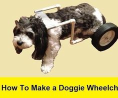 How To Make a Doggie Wheelchair