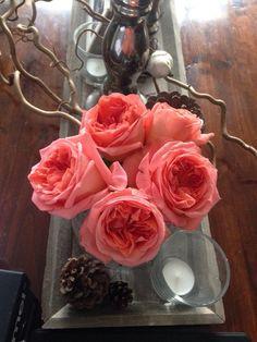 Garden roses Rene goscinny, what a delicate scent!